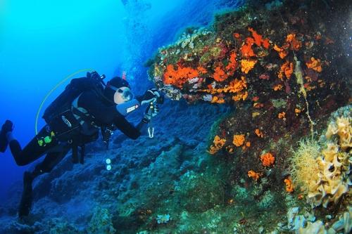 corali-2