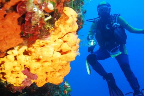 diver-up2