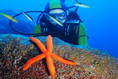 diving-asterias