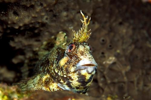 fish-strange